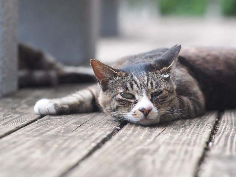 自由に生きる猫